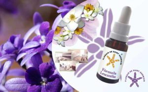 curso de flores de saint germain