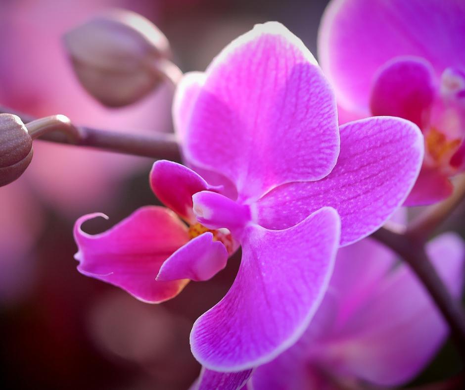 Esencias de Orquídeas Amazónicas